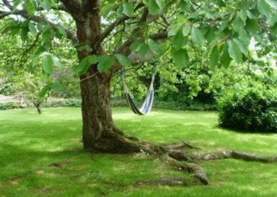 Hammock in cherry tree, Petit Tor garden in summer